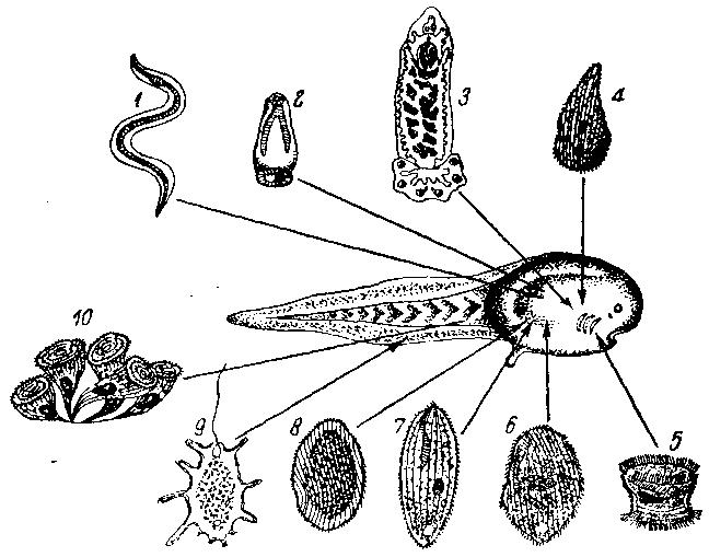 паразиты в позвоночнике человека видео