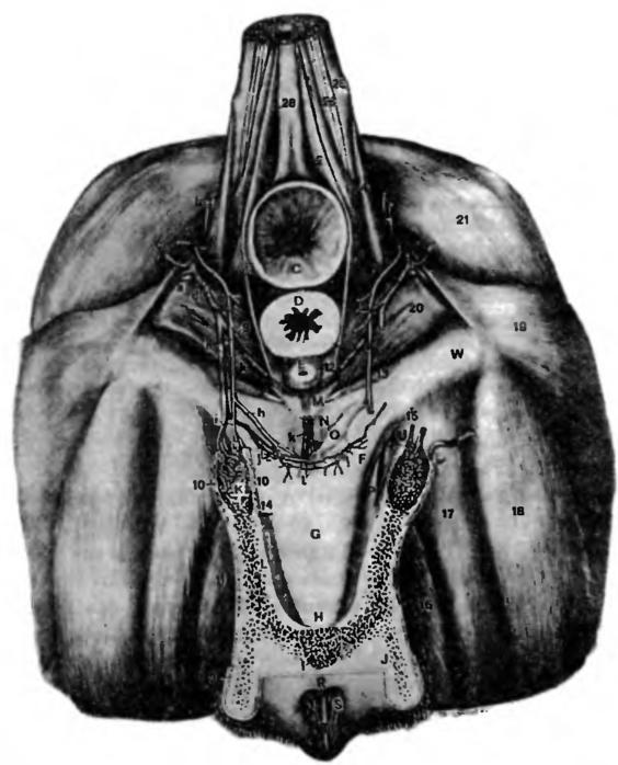секель женский фото