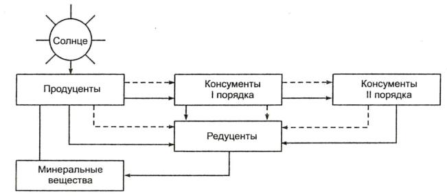 Схема трофической цепи