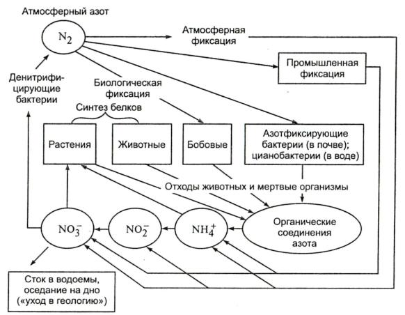 Схема круговорота азота