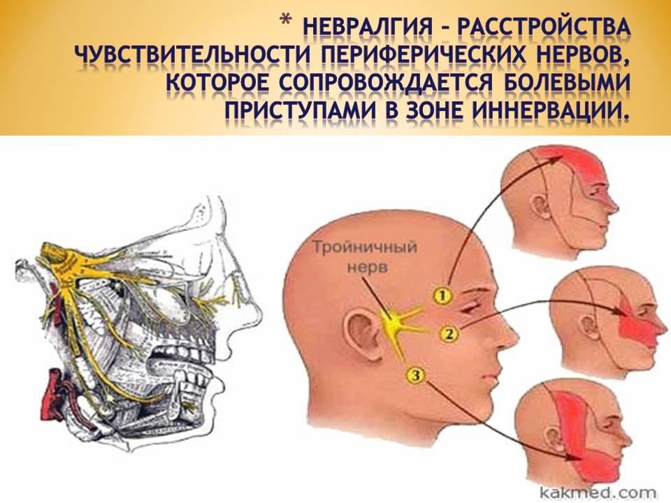 Тройничный нерв анатомия реферат 3569